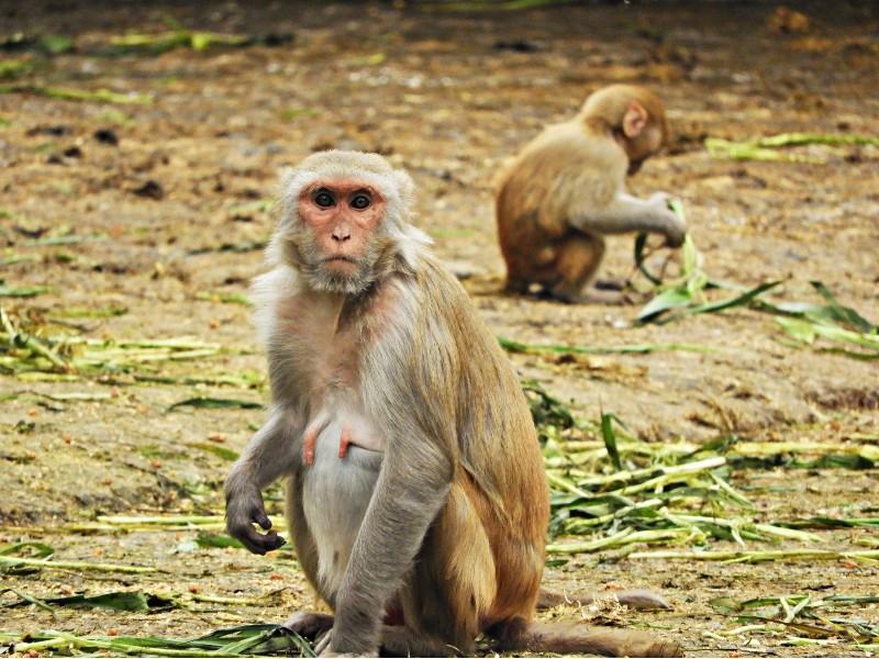 baboon monkey trap kalahari
